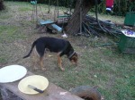 goat_choma_cleanup_guy_steve