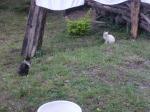 goat_choma_cleanup_guys_joe_n_sam
